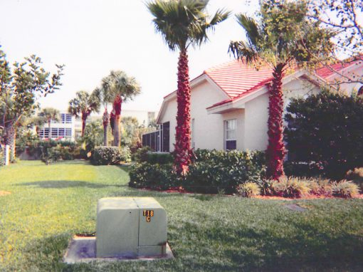 Residential Palm Pruning Before and After